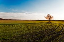 Free Small Tree On A Green Field Stock Images - 17100304