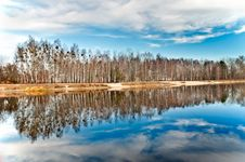 Birch Grove At The Lake Royalty Free Stock Photography