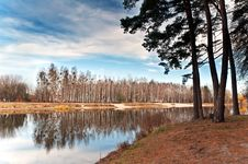 Birch Grove At The Lake 2 Royalty Free Stock Photography
