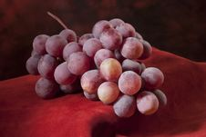 Branch Of Red Grapes Stock Image