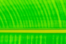 Free Green Leaf Pattern Stock Photography - 17103762