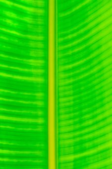 Free Green Leaf Pattern Stock Images - 17103914