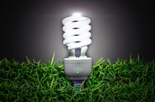 Bulb Over  Green Grass Stock Image
