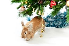 Free Rabbit With A Fur-tree. Stock Photos - 17104933