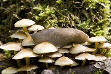 Free Snail Stock Photos - 17107253
