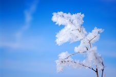 Free Hoarfrost Royalty Free Stock Photography - 17107317