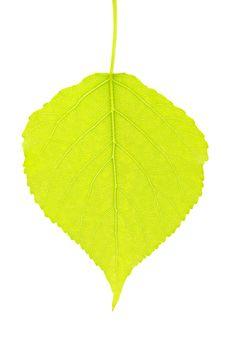 Free Green Leaf Stock Photo - 17107470