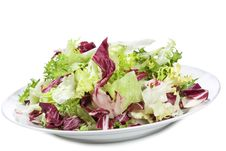Free Salad Leaves Royalty Free Stock Photography - 17108287