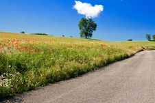 Poppy Field On Country Road Stock Photography