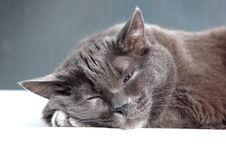 Free Sleeping Cat Stock Photo - 17109340