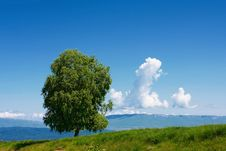 Free Alone Tree Stock Photography - 17109392