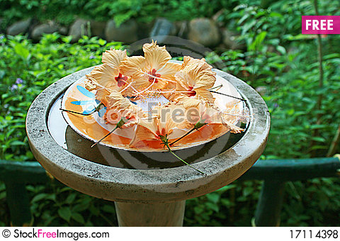 Free Garden Decoration Of Hibiscus Flowers On Plate Royalty Free Stock Photos - 17114398