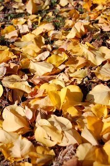 Free Leaf Pattern Stock Photography - 17110422