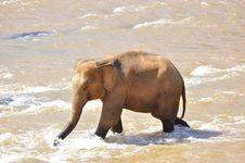 Free Elephant In River Royalty Free Stock Image - 17111576