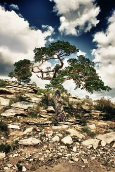 Free Lonely Tree On A Rocks Royalty Free Stock Photography - 17111577