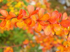 Free Colorful Leaves Stock Photography - 17112012