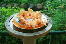 Garden Decoration Of Hibiscus Flowers On Plate Royalty Free Stock Photos