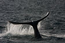 Whale S Tail Stock Images
