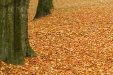 Free Fallen Leaves On The Ground Stock Photos - 17116803