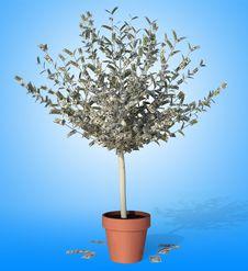 Free Money Tree Royalty Free Stock Photos - 17117858