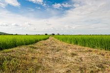 Free Beautiful Rice Field Over Blue Sky Stock Image - 17118481