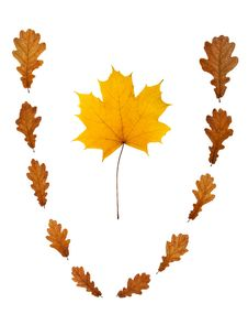 Free Maple Leaf In Vignette Royalty Free Stock Photo - 17118595