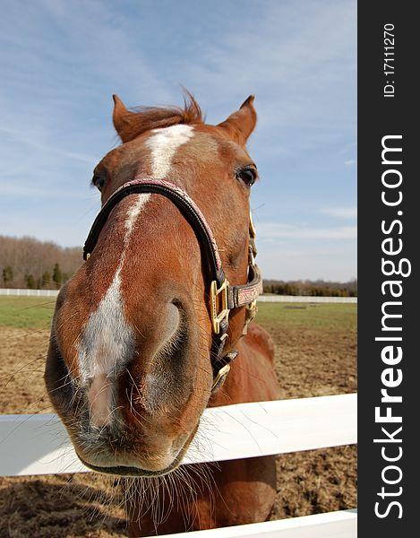 Horse head closeup
