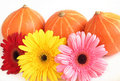 Free Three Pumpkins And Three Colorful Daisies  On Whit Royalty Free Stock Image - 17127426