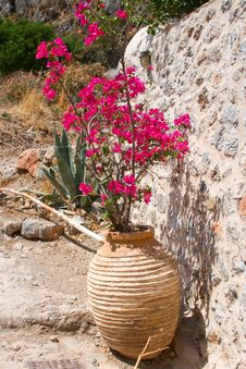 Free Vase With Flower In Monemvasia Royalty Free Stock Image - 17121776