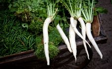 Free Indian Radish Chilly, Spinach Stock Photography - 17121802