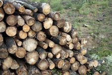 Free Stacked Timber Logs - Fuel For Fire Royalty Free Stock Photos - 17122768