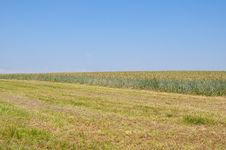 Free Wheatfield Stock Images - 17122944