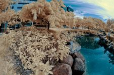 Free Garden In Fisheye - Infrared Royalty Free Stock Photography - 17123997