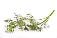 Free Brunchlet Of Fresh Green Dill Stock Image - 17127341