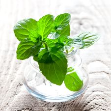 Free Mint In A Glass Stock Photos - 17128153
