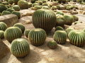 Free Cactus Garden Stock Photos - 17131983