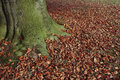 Free Autumn Leaves Fallen On Lawn And Tree Royalty Free Stock Photo - 17138555
