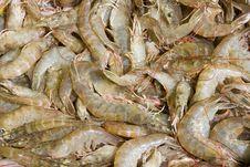 Free Shrimp Stock Royalty Free Stock Image - 17131296