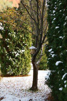 Free Snow Tree Royalty Free Stock Image - 17131326