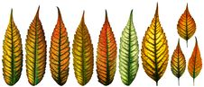 Free Isolated Color Leaves Royalty Free Stock Image - 17131936