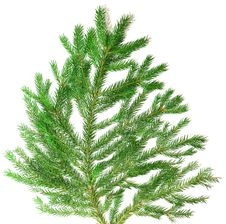 Fir Branch Background Royalty Free Stock Photography