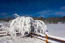 Free Snow Covered Tree And Fence Stock Image - 17133471