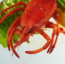 Free Cooked Lobster Stock Image - 17133861
