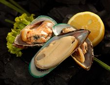 Free Mussels Royalty Free Stock Photos - 17133878
