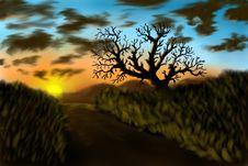 Free An Alone Tree Stock Photos - 17137133