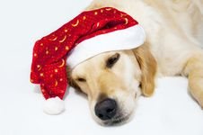 Santa S Dog Royalty Free Stock Photo