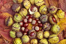 Free Chestnuts And Autumn Leaves Royalty Free Stock Photography - 17138367