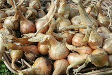 Free Just Picked Onions Shallots Stock Photo - 17138420