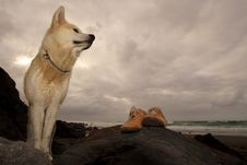 Free Akita Inu And Shoes In A Beach Royalty Free Stock Photography - 17138587