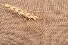 Free Wheat Ear Stock Photography - 17140732